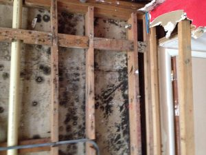 Mold in walls